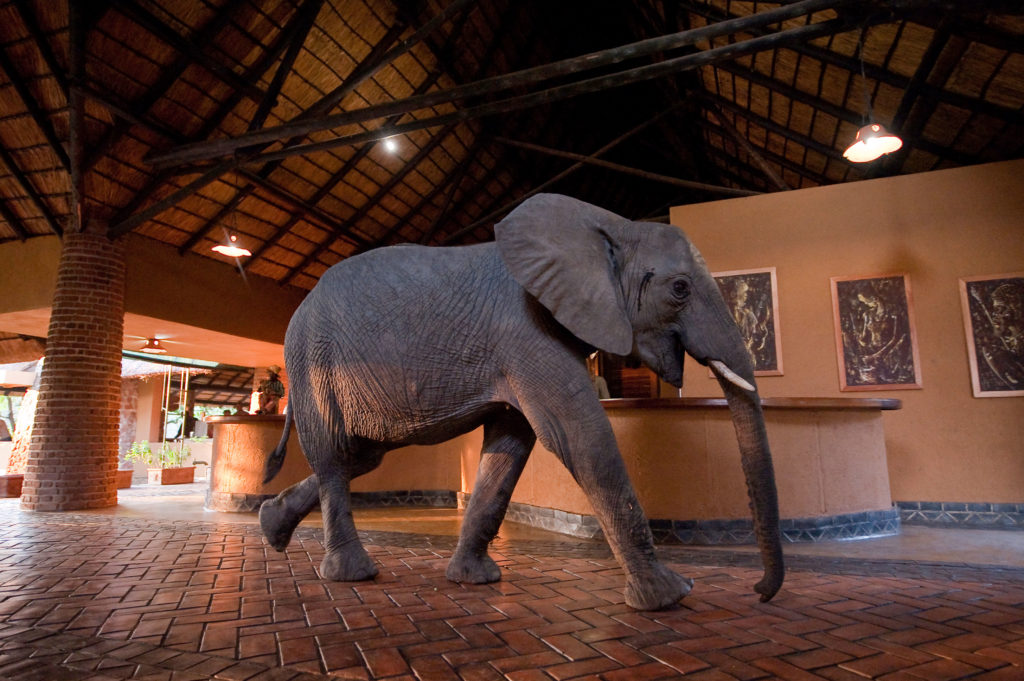 Mfuwe Lodge, Zambia