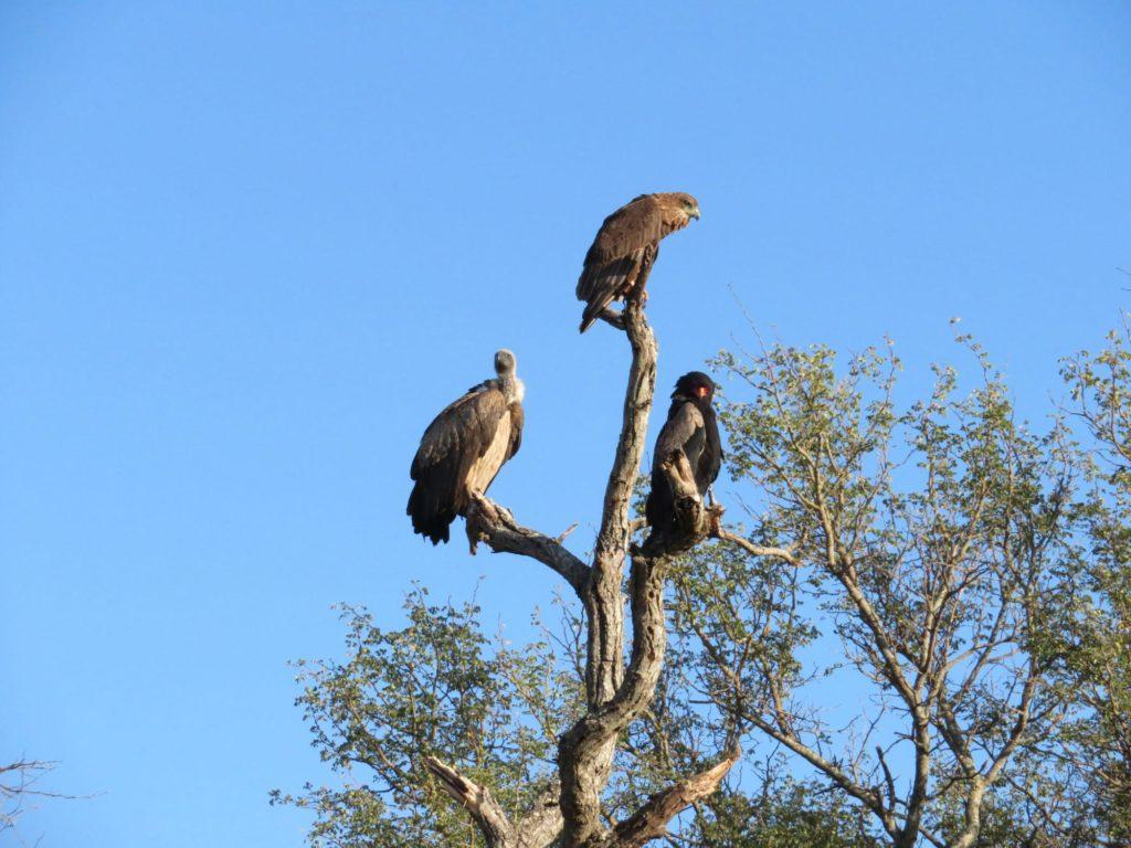 Bird Watching on Safari in Africa