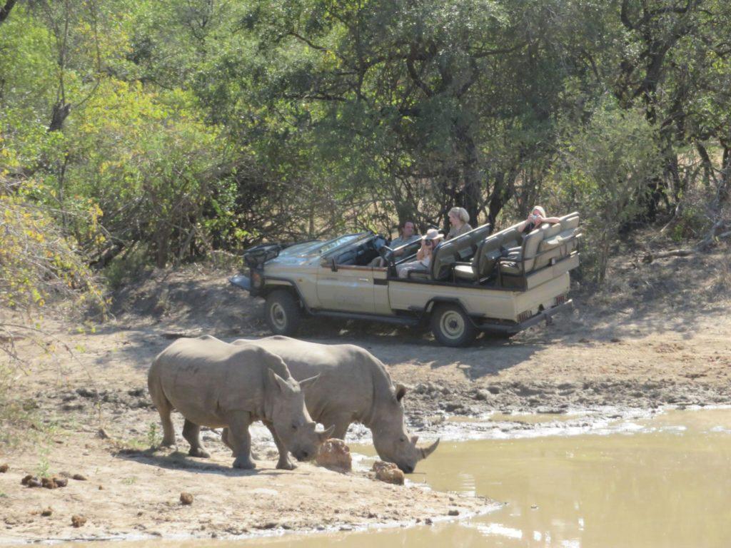 photographing rhinos on safari