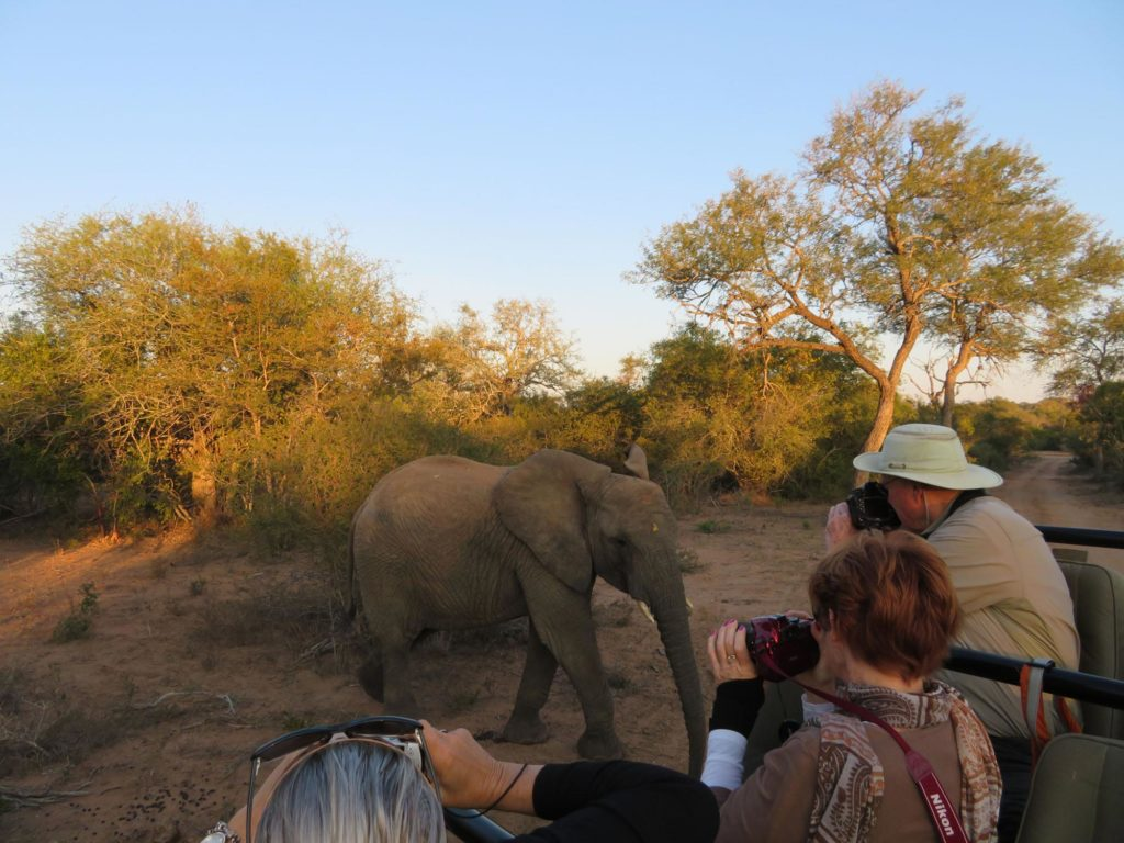 Up close and personal on safari in South Africa
