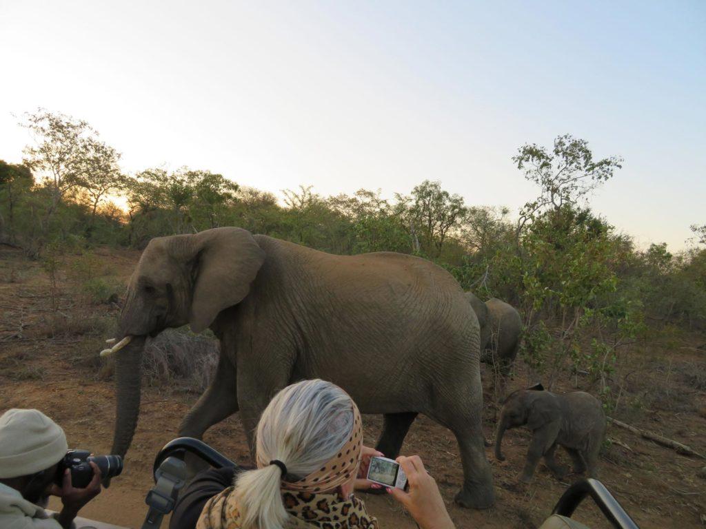 On safari near Kruger National Park, South Africa