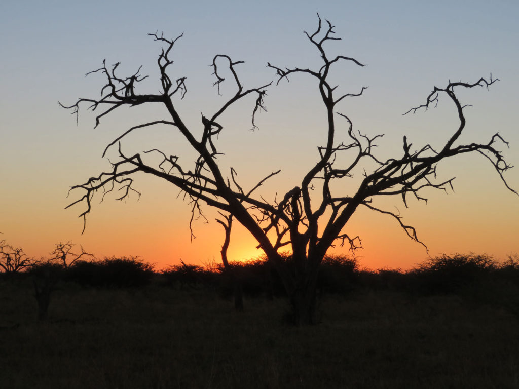 Beautiful sunsets on safari