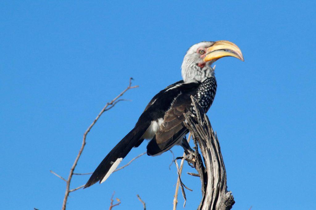 Birdwatching in Africa