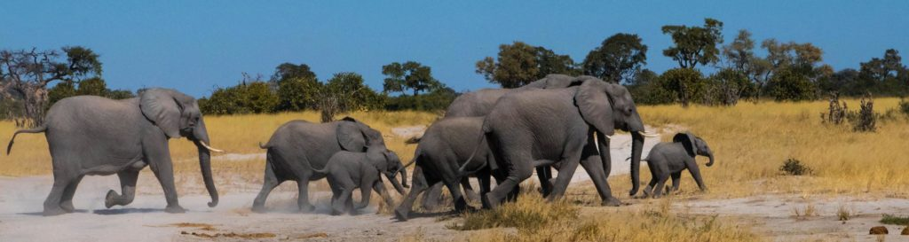 elephant-banner