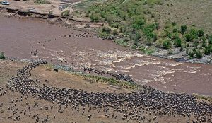 Aerial view of the Great Migration