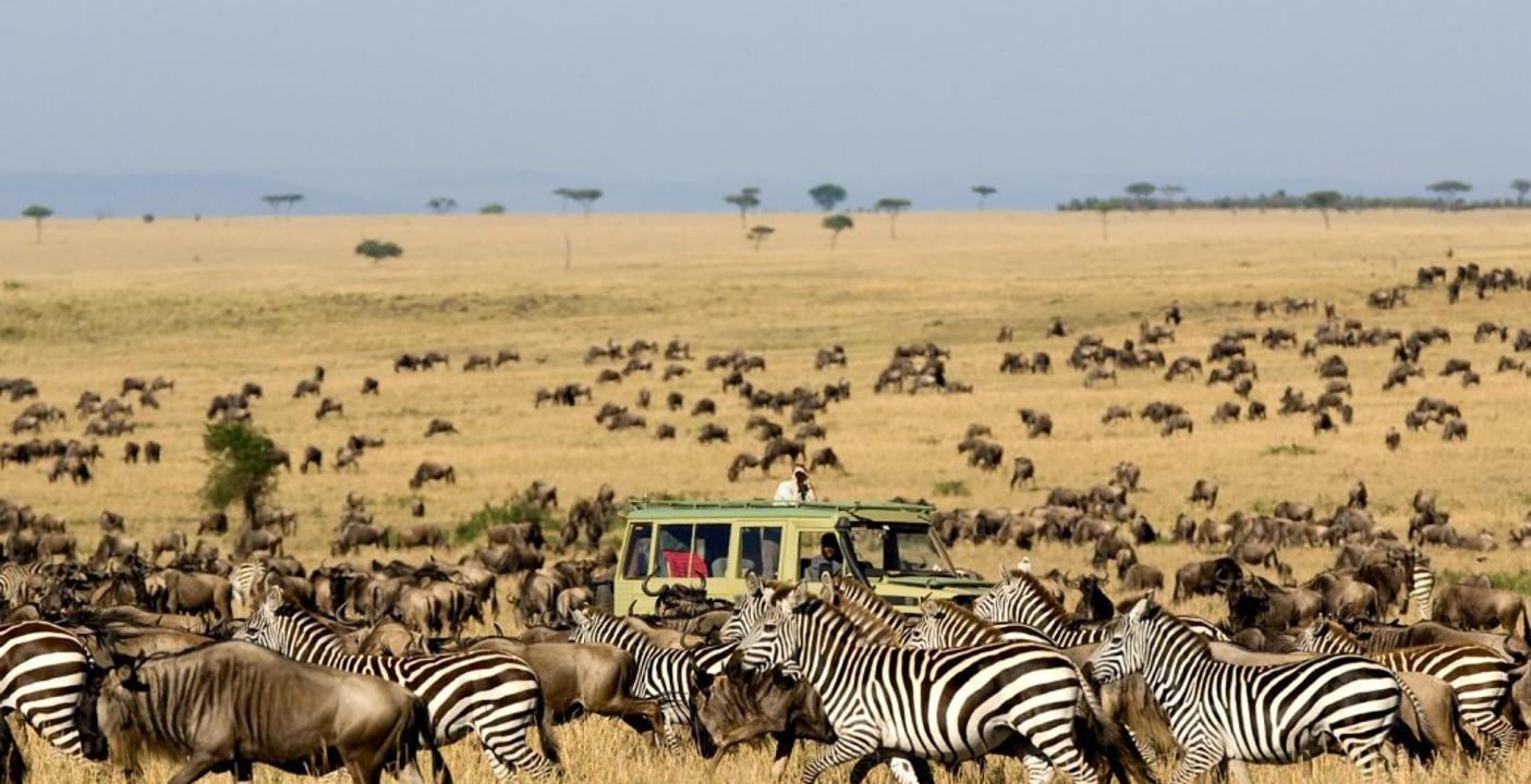 on Safari during the Great Migration