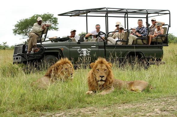 Safari in Kruger, South Africa