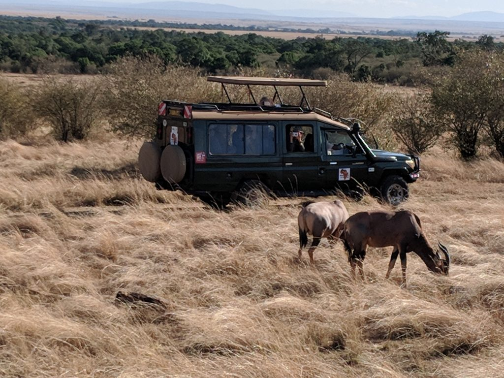 The Rhythms of Safari