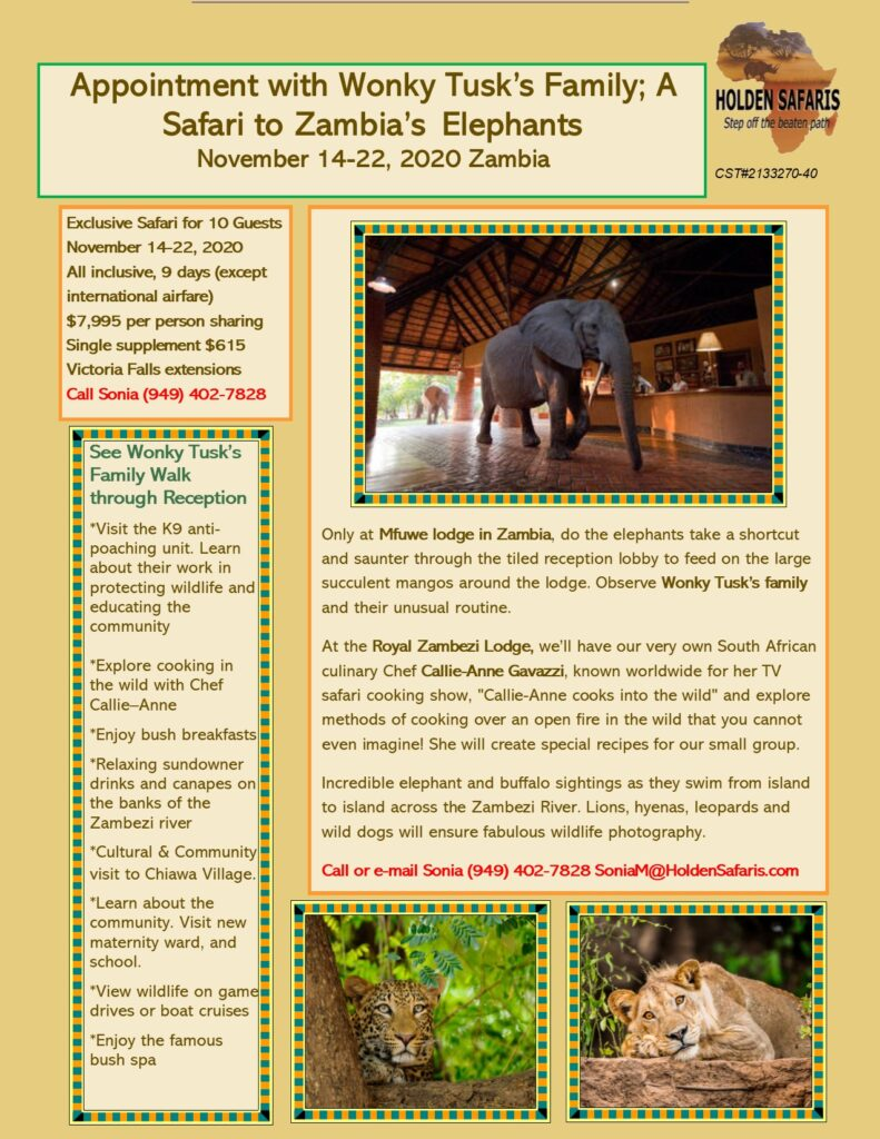 Appointment with Wonky Tusk's Family; A Safari to Zambia's Elephants November 14-22, 2020 Zambia
