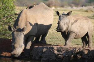 Jamala Madikwe Rhinos
