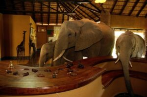 Join us to see the Elephants at Mfuwe Lodge