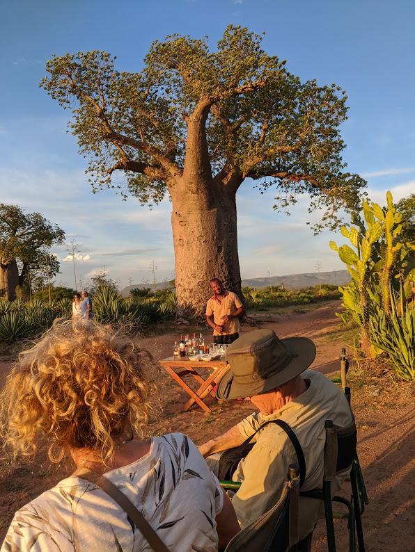Madagascar S Upside Down Tree Holden