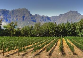 CapeWinelands